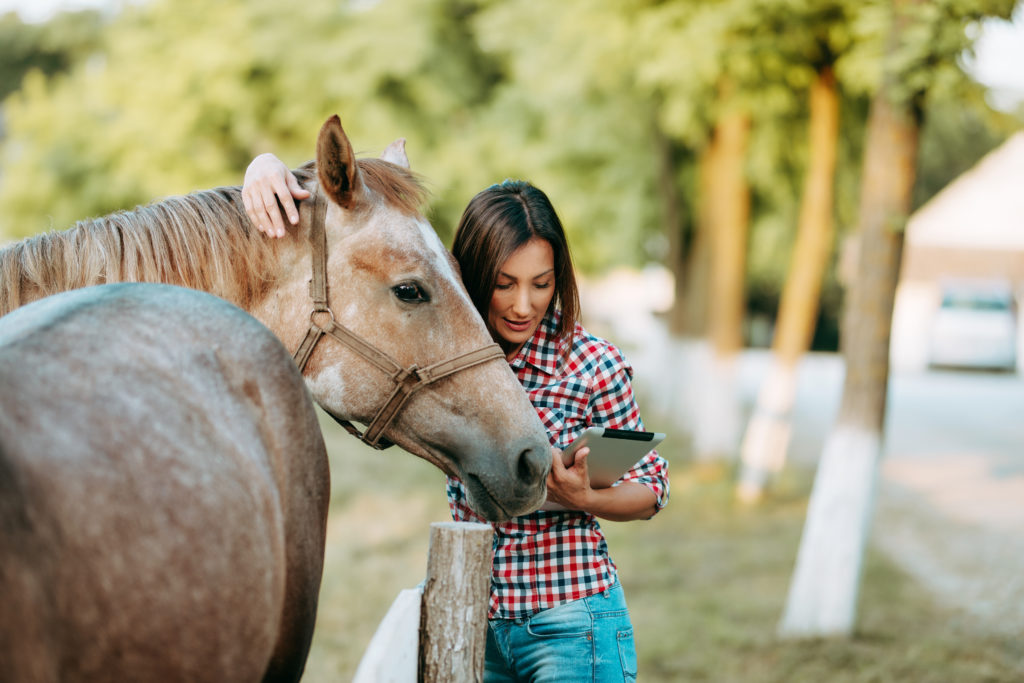 Veterinarian working with horse on a farm.